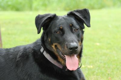 Кератит у собаки лечение